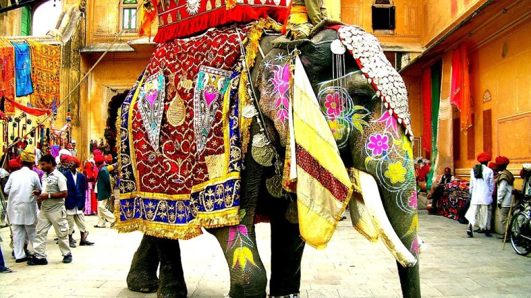 indian_elephant rajasthani-tadka